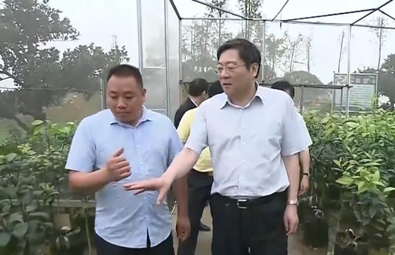 省委书记杜家毫调研湘投集团参投的龙丰果业